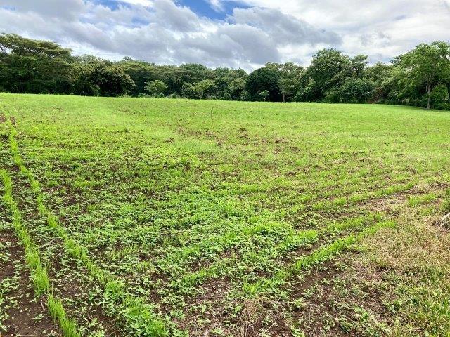 tierra-agricola-en-venta-granada-nicaragua (12)