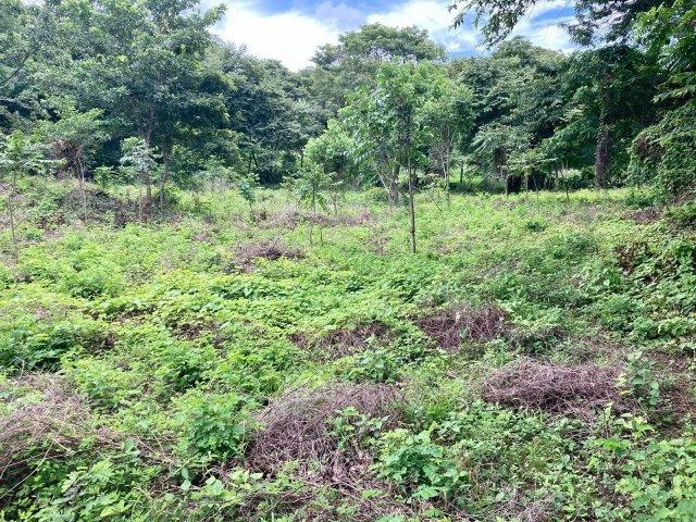 tierra-agricola-en-venta-granada-nicaragua (8)