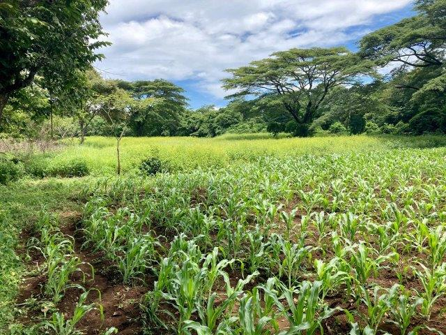 tierra-agricola-en-venta-granada-nicaragua (9)