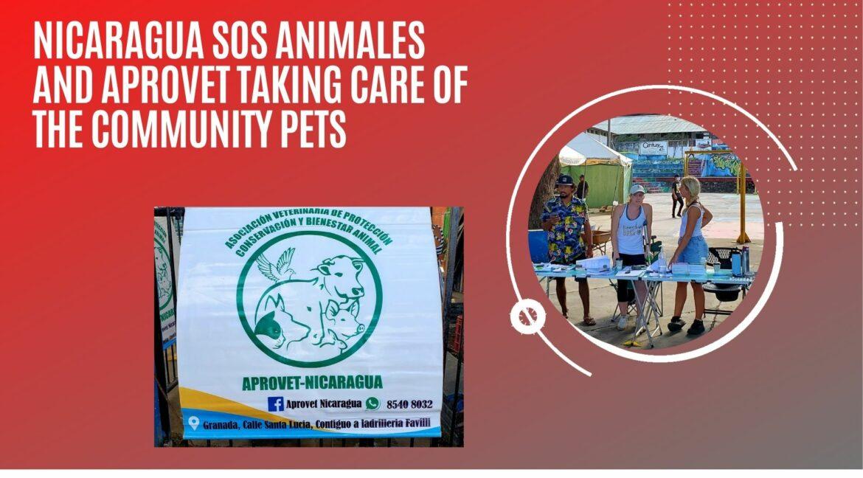 Nicaragua-animal-care