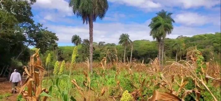 nagarote-farm-nicaragua