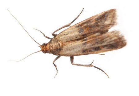 Pantry moth home services in Cleveland, OH.