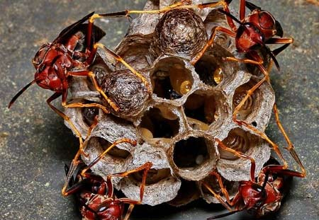 stinging insect control, paper wasps in Cleveland, OH.
