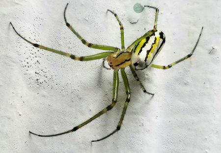 spider home pest control- Lakewood Exterminating in Cleveland, OH