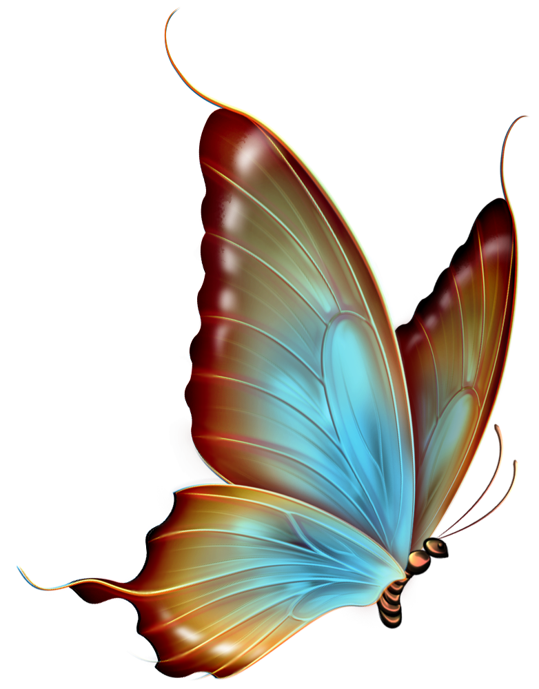 an image of a blue and brown butterfly