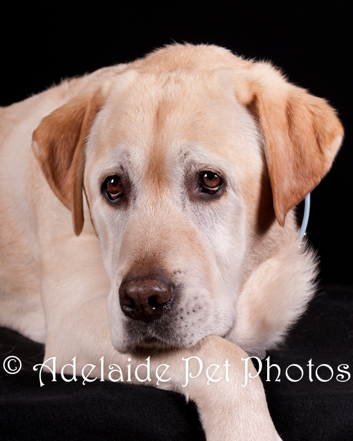 Adelaide Pet Photos, pet photography by Janet Coelho