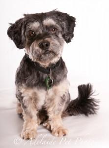 Adelaide Pet Photos, professional pet photography, Adelaide