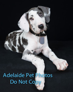 Adelaide Pet Photos by Janet Coelho