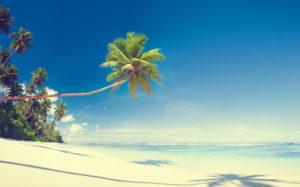 46549091 - scenic white sand beach summer tree concept