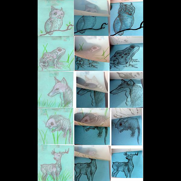JaredKonopitski-600-19-Vellum Animal Skeleton Post ITs