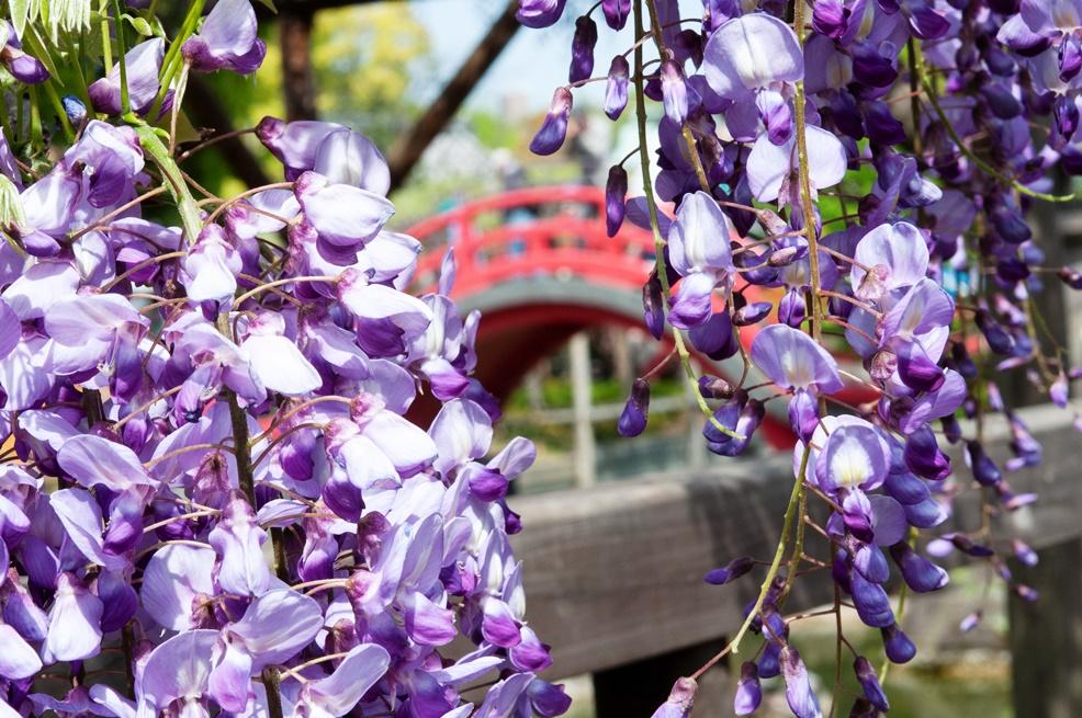 wisteria tokyo