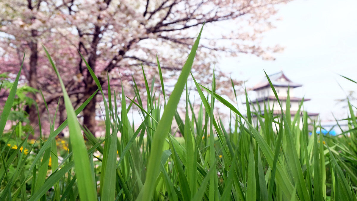 Японский интернет-сленг: «трава» – это весело!