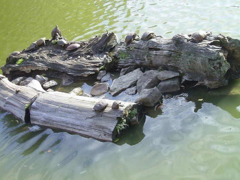 на реке Камогава
