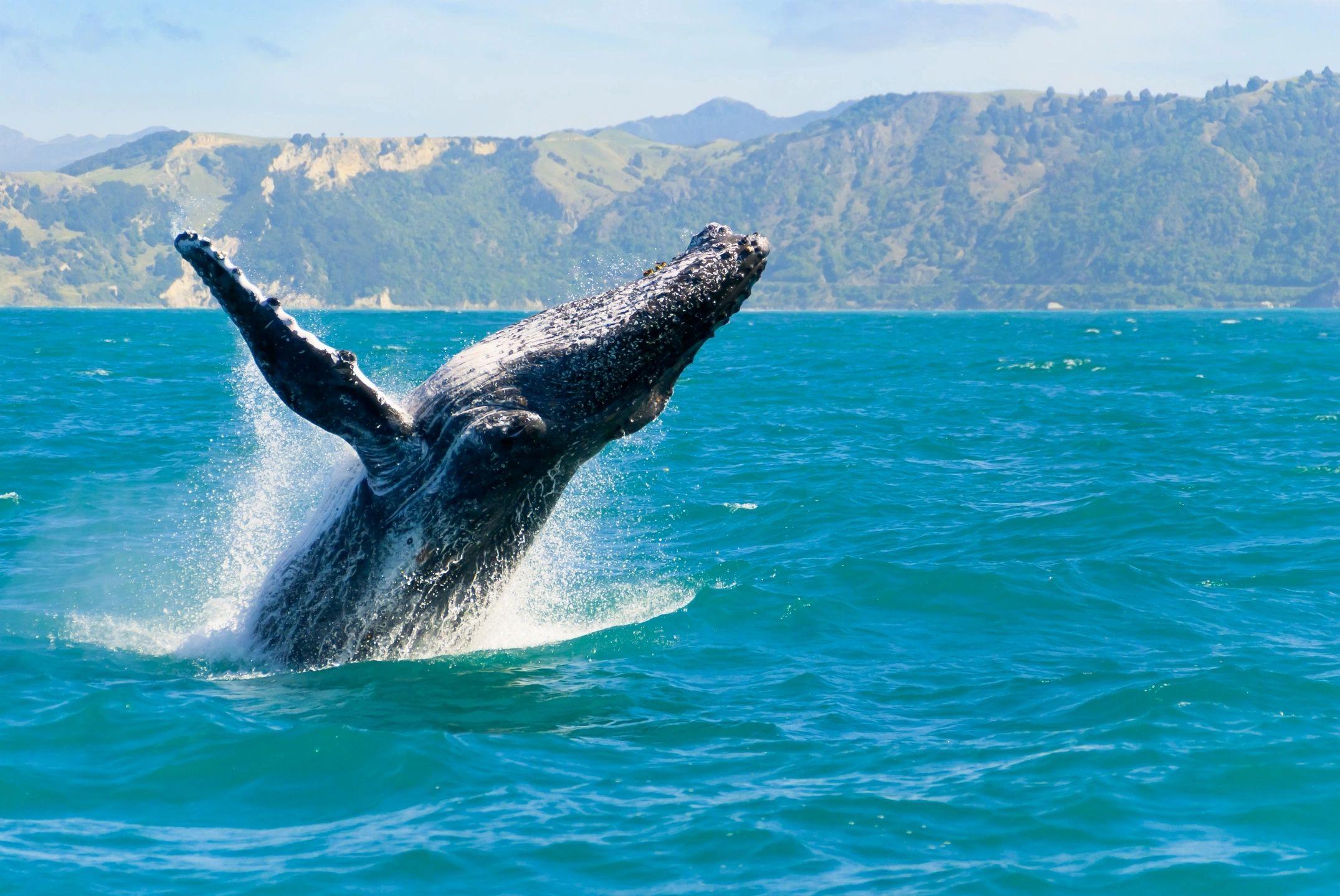 Avistamiento de ballenas en San Juan del Sur Nicaragua