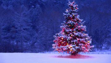 Christmas-Tree-in-Snow-1024x576