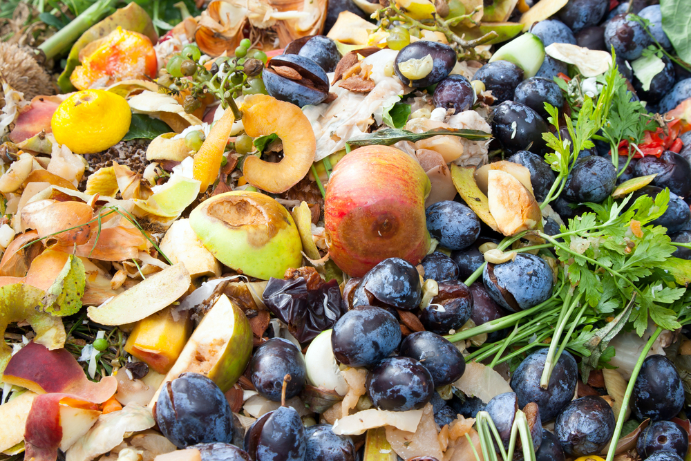 THE DREAM AS COMPOST: A Special Dream Essay for Earth Day