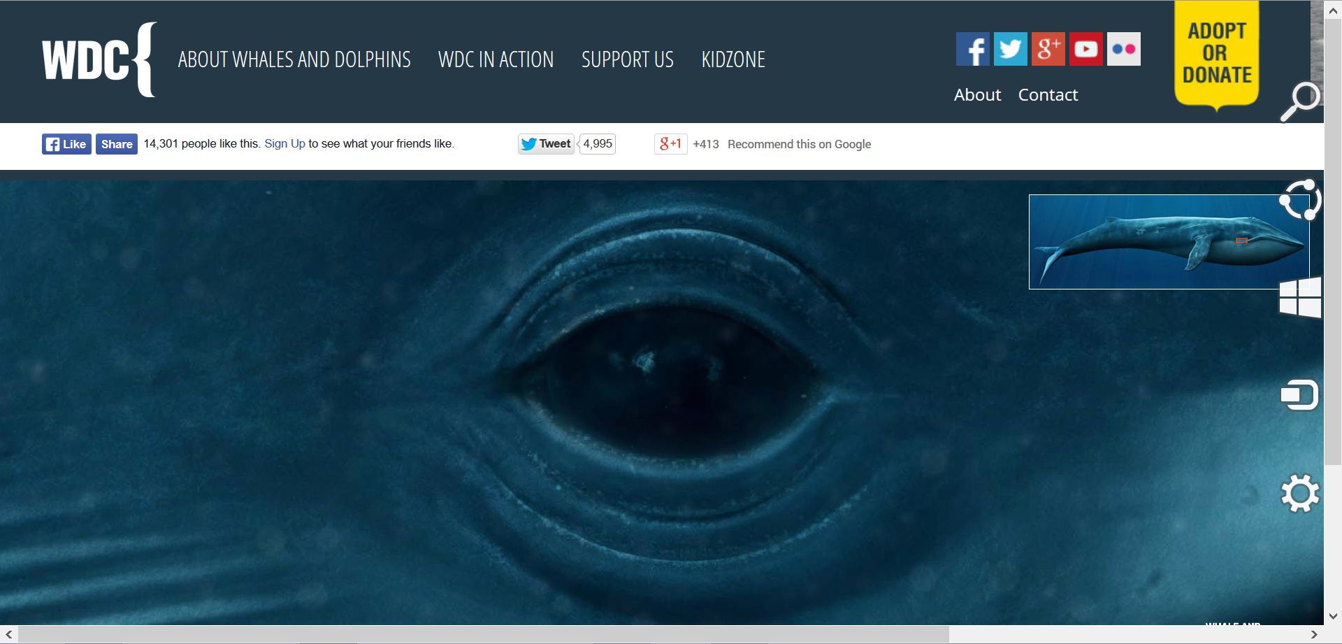 Life-size blue whale