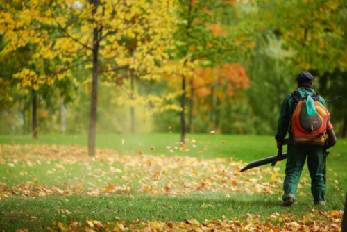 The Importance Of Leaf Cleanup