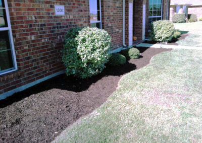 Bush Planting Expert - DFW Texas