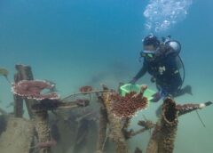 The parlous state of China's coral reefs