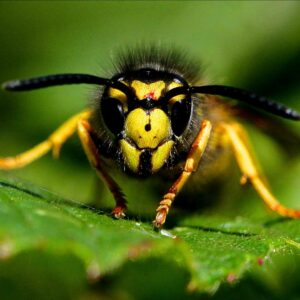 Exterminating Flying Insects