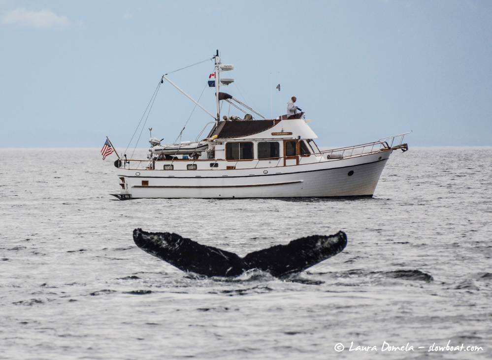 wildlife-humpbacks
