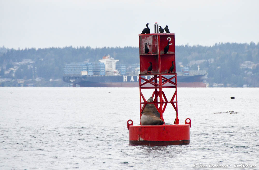 Sea lion rests on a buoy