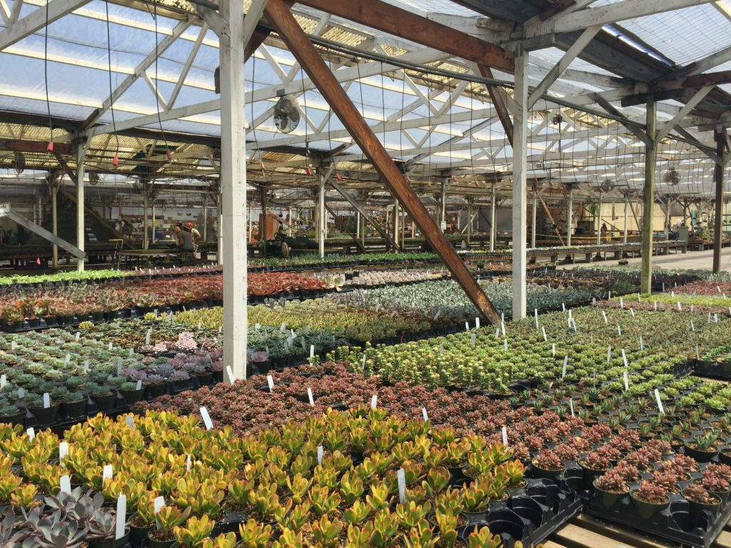 Greenhouse gorgeousness