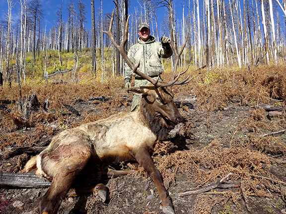 Rifle Elk 018