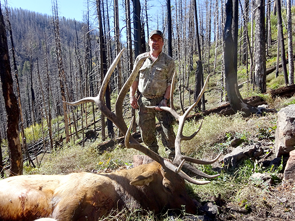 Rifle elk 001