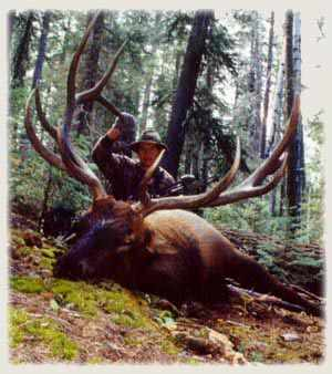 tim hooey MI 382 P&Y Gila Wilderness