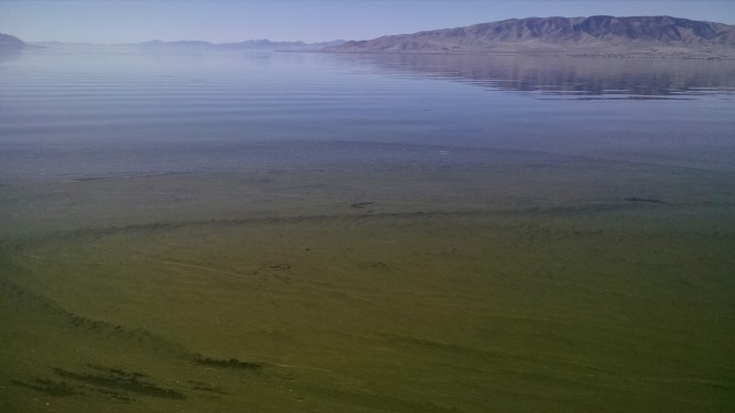 Reports from 2020 Algae Treatments at Utah Lake