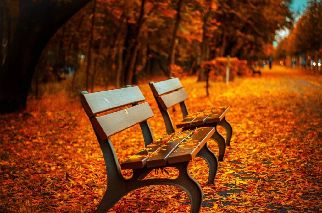 benches with leaves on the ground