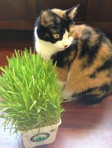 home-main-cat
