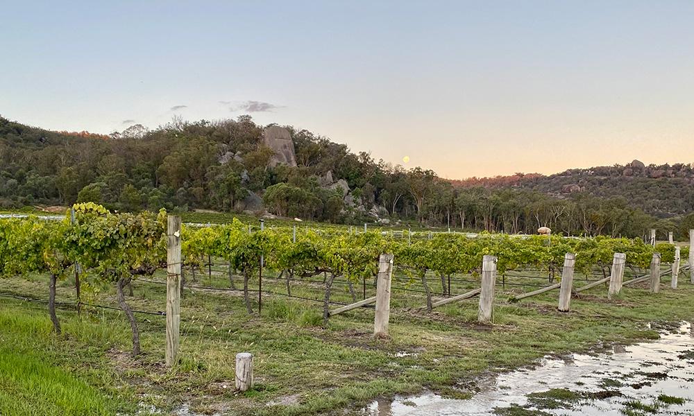 Balancing Heart vineyard. Credit: Chris Ashton