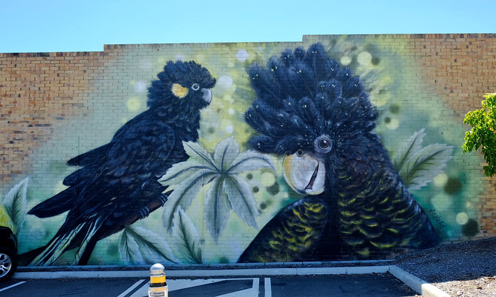 A Stanthorpe mural of black cockatoos. Credit: Chris Ashton