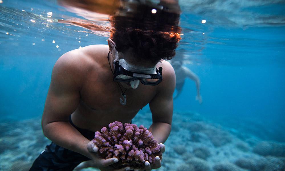 Credit: Coral Gardeners / Ryan Borne.