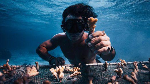 Coral Gardeners making a difference in Tahiti. Credit: Coral Gardeners / Ryan Borne.