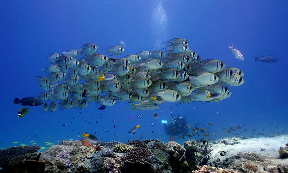 . A spectacular school at Ningaloo Reef. Credit: PADI