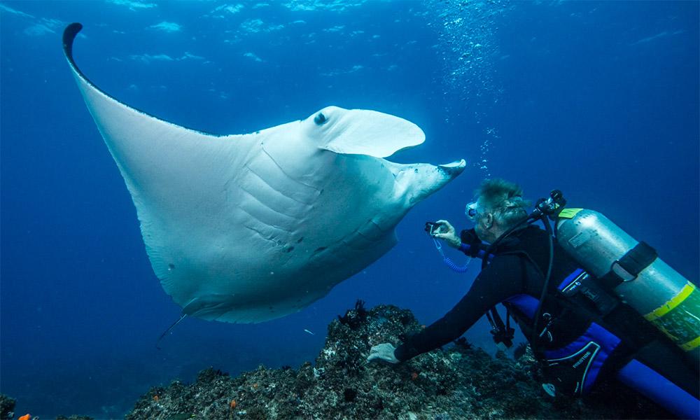 Up close with a manta ray at Julian Rocks. Credit: Sundive Byron Bay