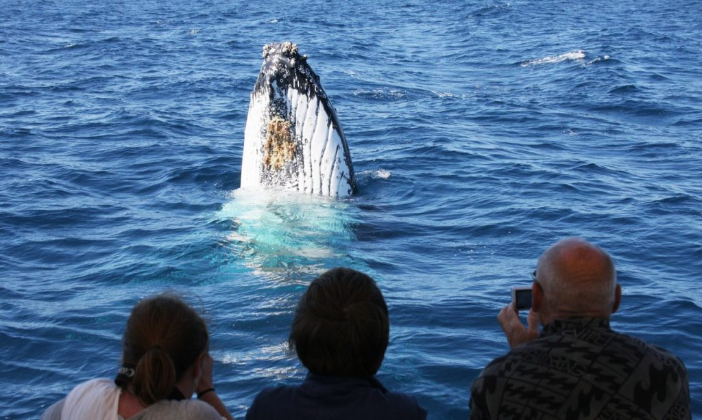 Whale watching in Jervis Bay. Credit: Dolphin Watch Cruises