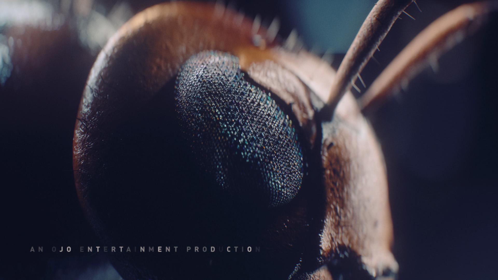 hornet_eye
