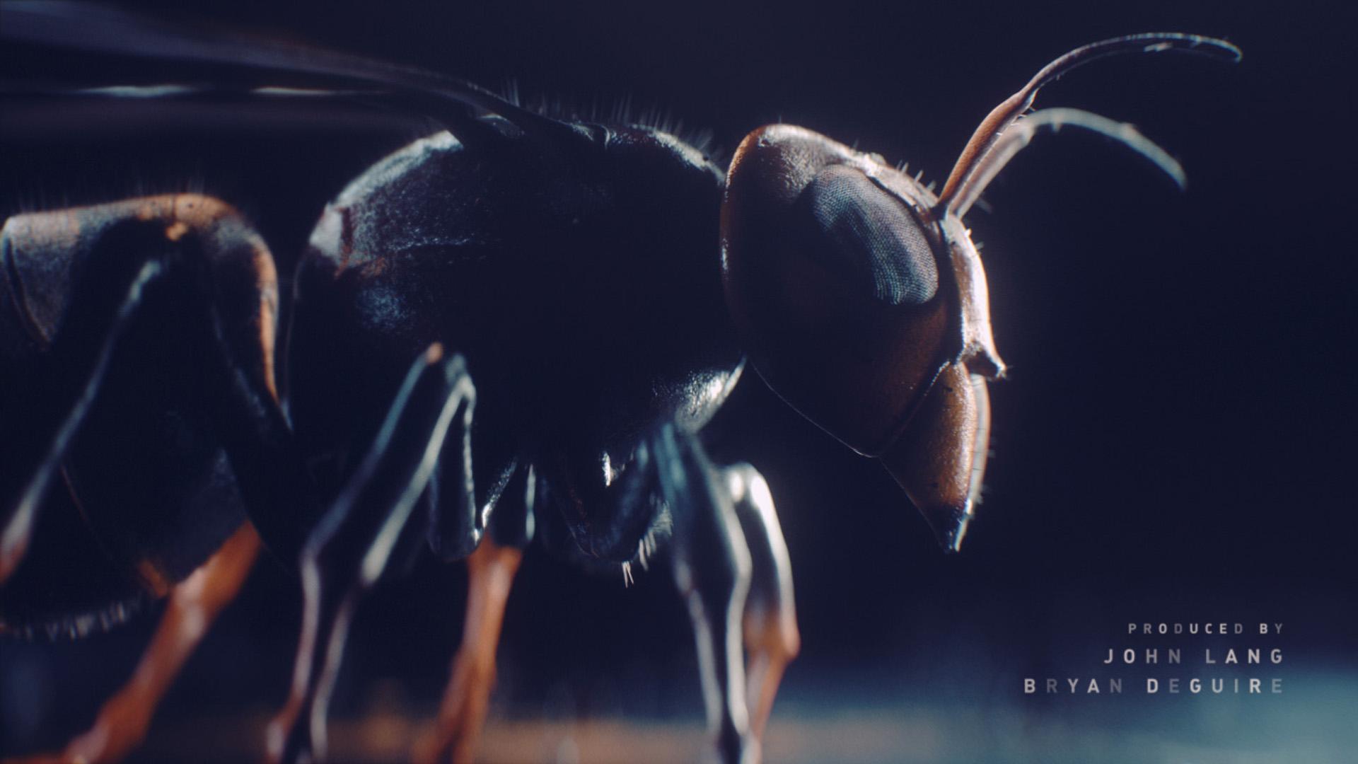 hornet_side