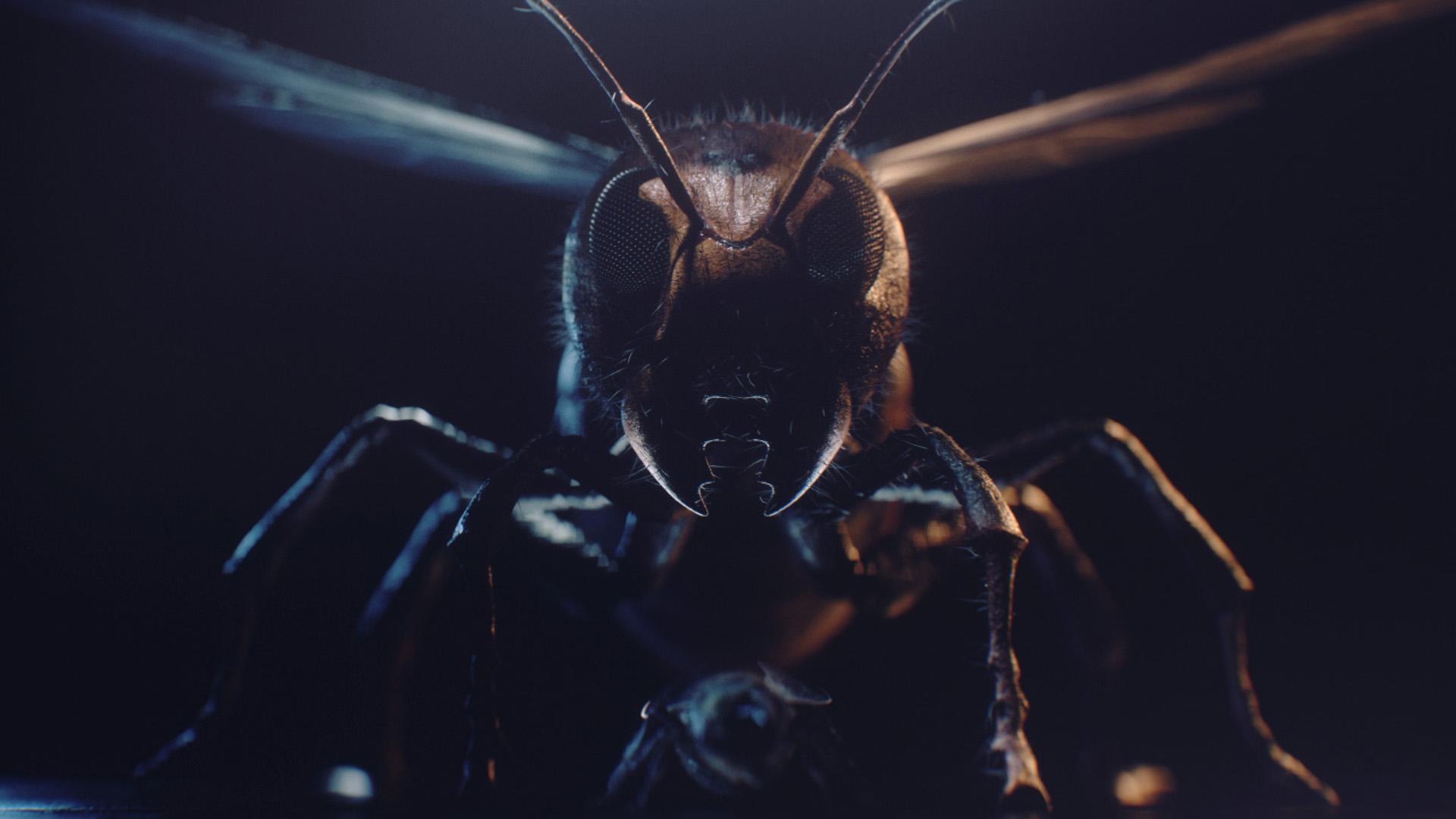 hornet_wide