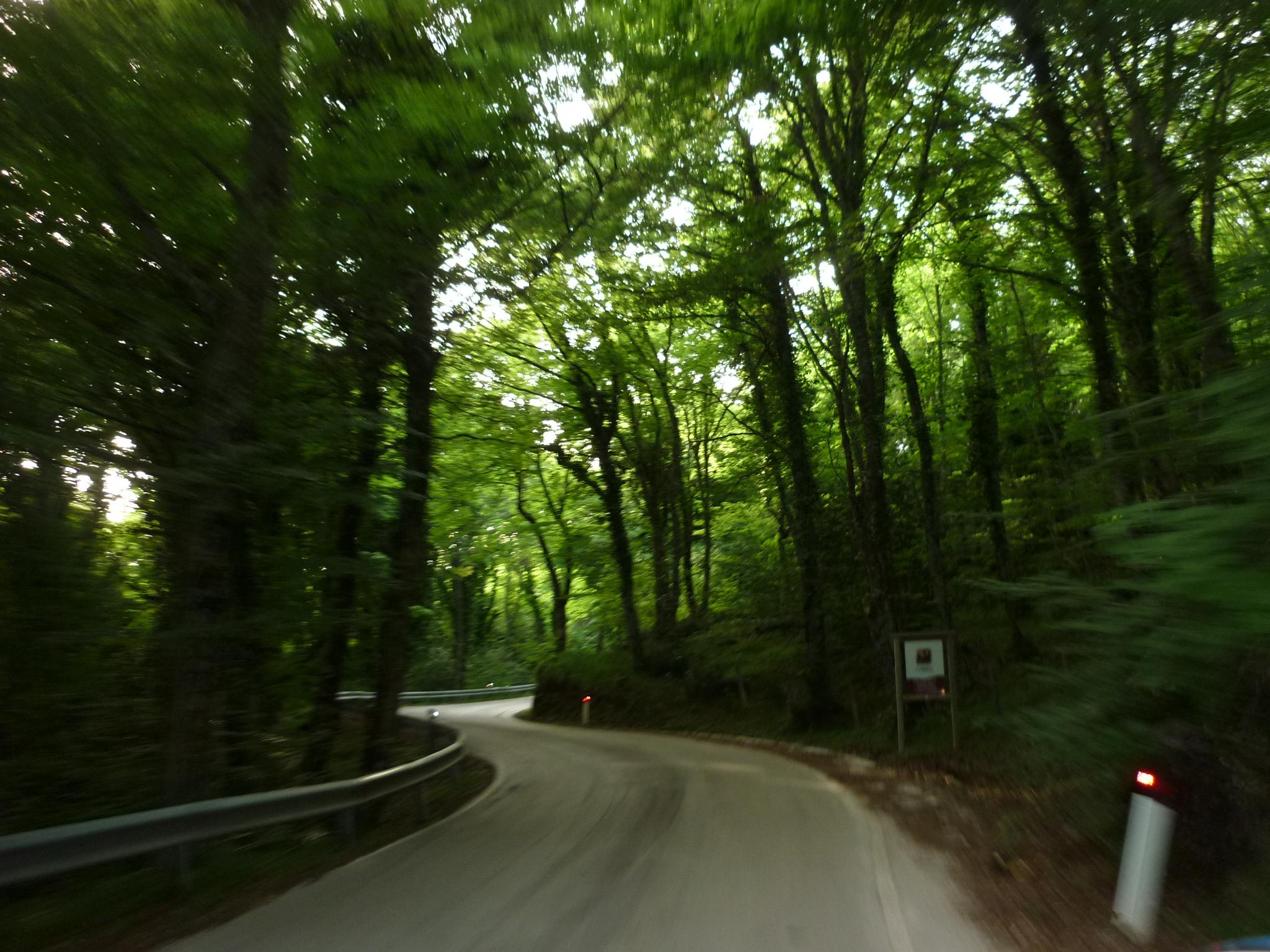 italiainpiega-pieghe meravigliose-itinerari-moto-sud-italia-gargano-foresta umbra 1