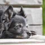 aging dog los lunas vet