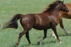 cee rt rearish trotting blurred 6-2010