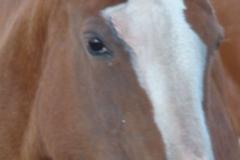cherry face rt closeup 10-8-141