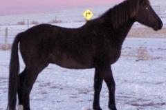 cola 112507 rt side dark