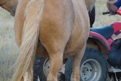 daisy rear rtish 9-10-11